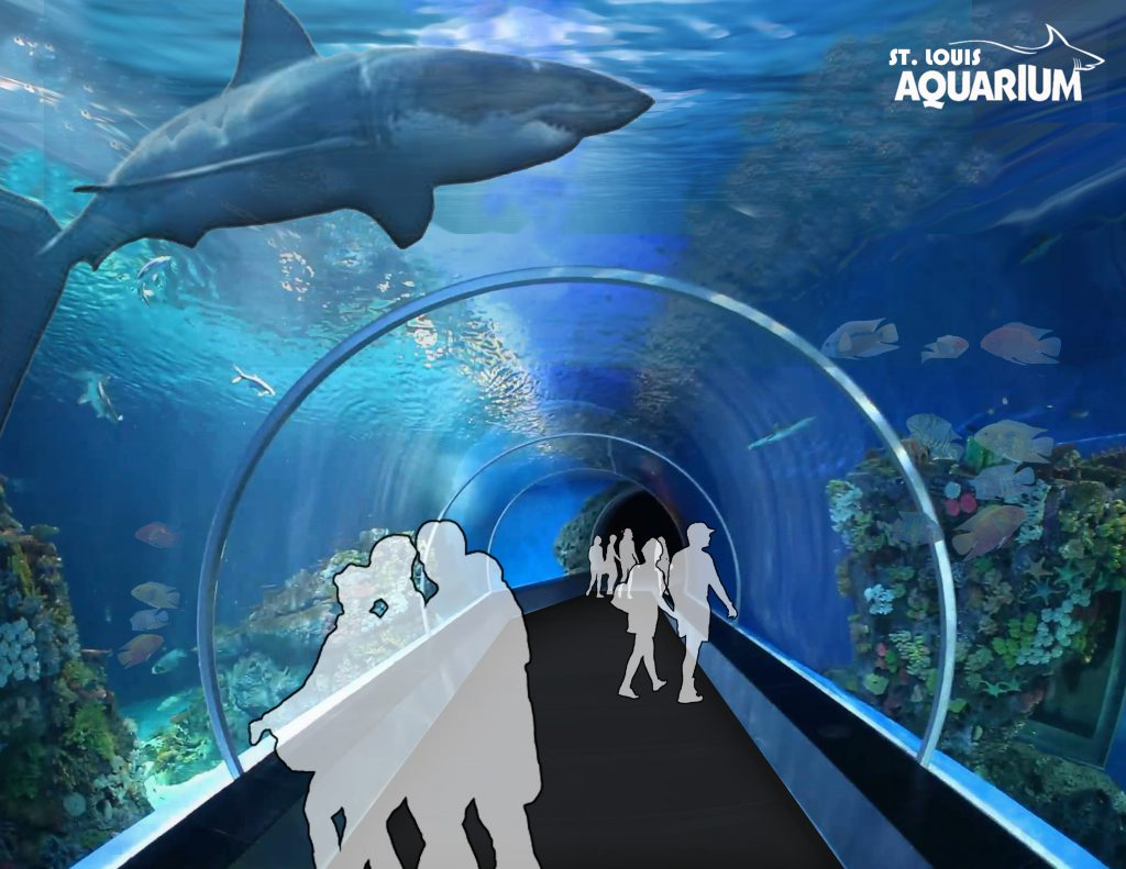 Shark Tube