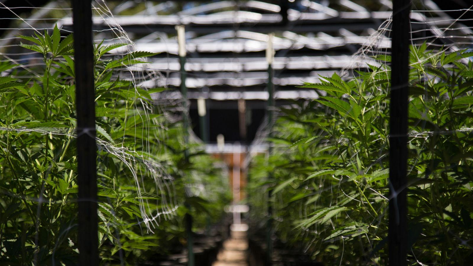 CannaOutsider Seeks to Simplify Marijuana Initiatives for the Missouri Voter